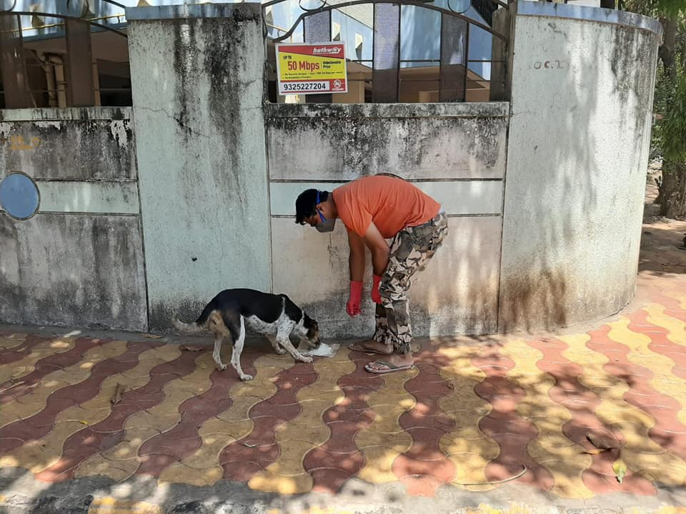 On 31st March food distributed more than 30+ Street Dogs at Kothrud, Pune